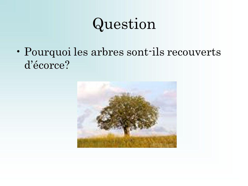 Question Pourquoi les arbres sont-ils recouverts d'écorce