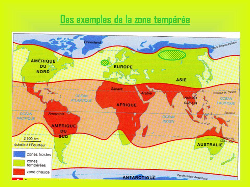 Des exemples de la zone tempérée