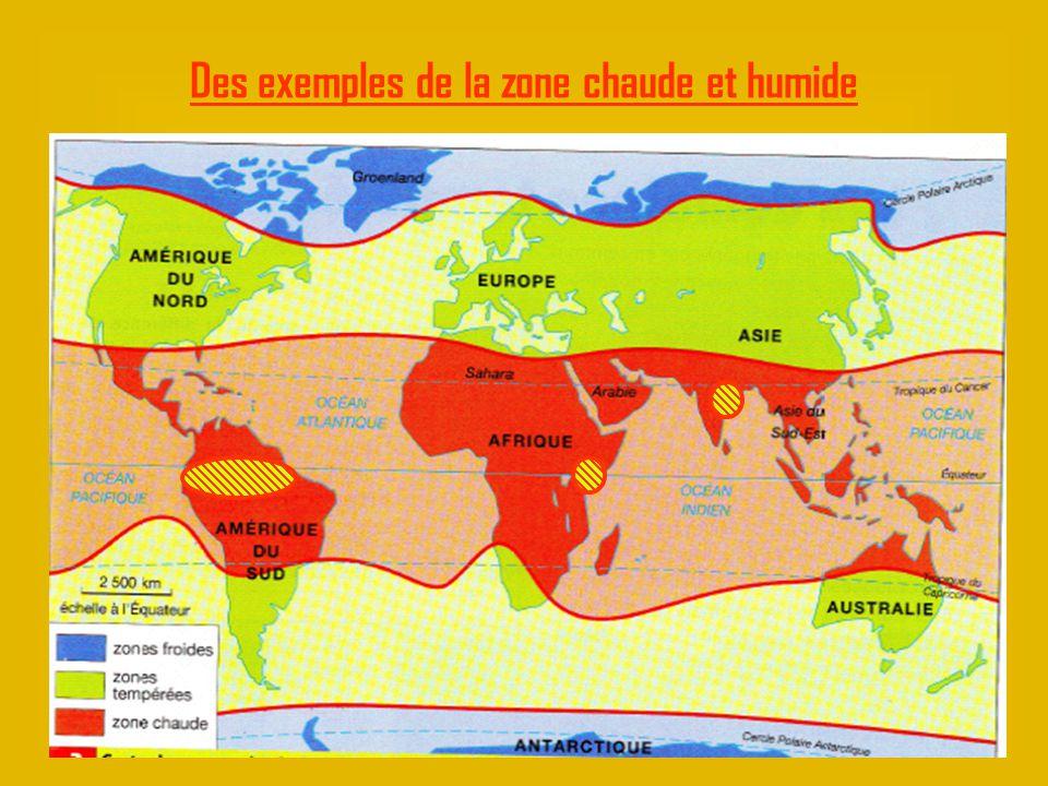 Des exemples de la zone chaude et humide