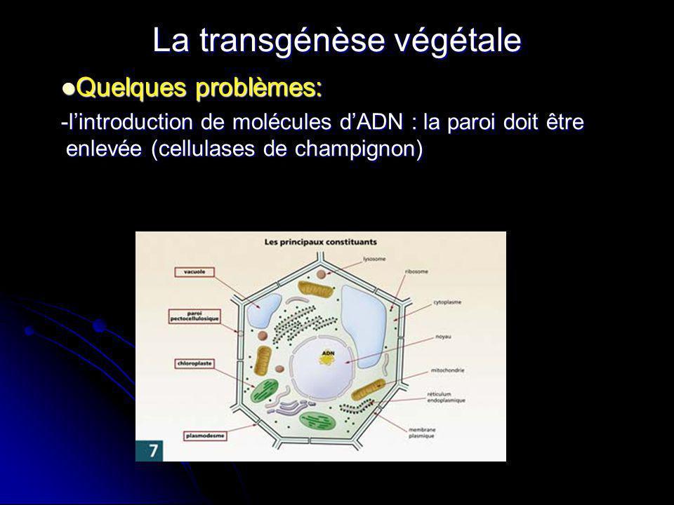 La transgénèse végétale