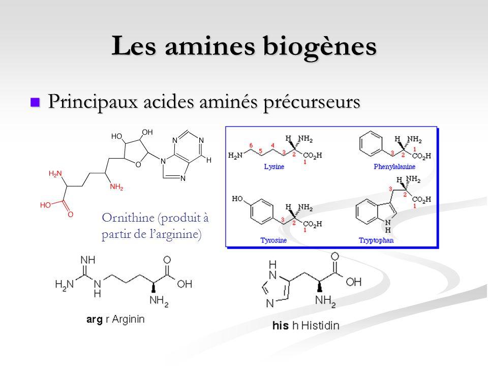 Les amines biogènes Principaux acides aminés précurseurs