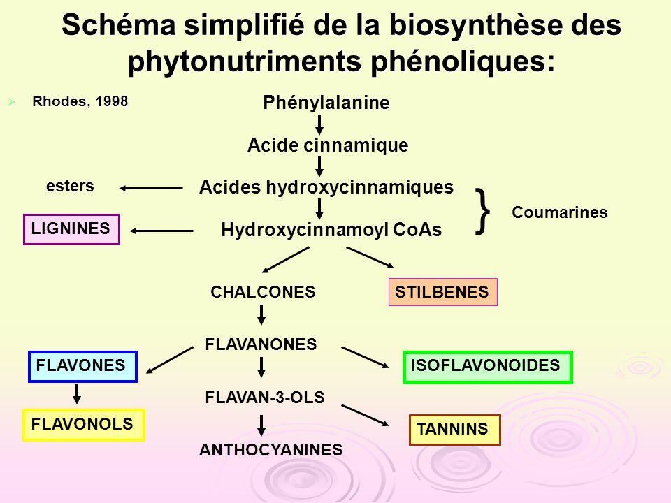 Schéma simplifié de la biosynthèse des phytonutriments phénoliques: