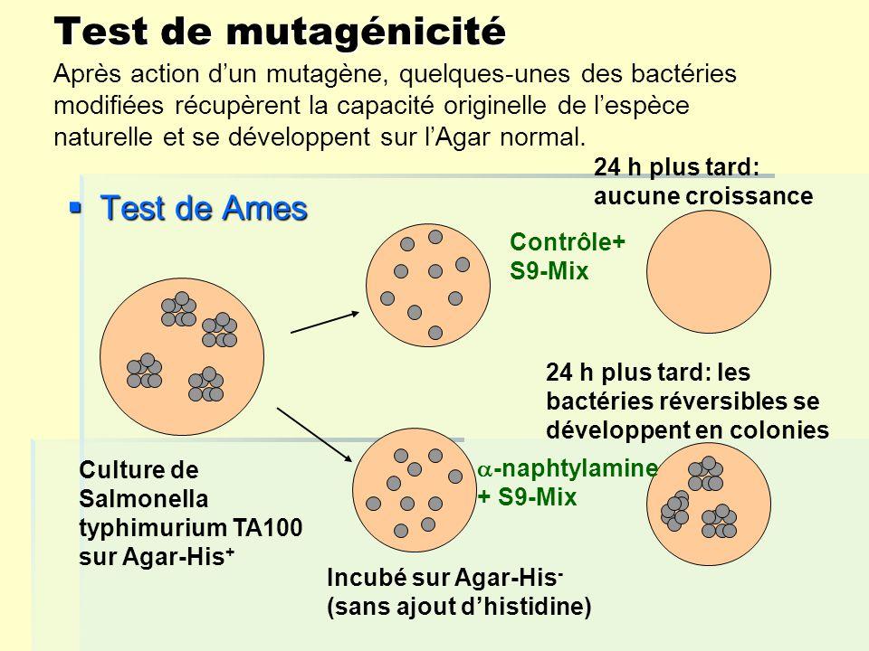 Test de mutagénicité Test de Ames