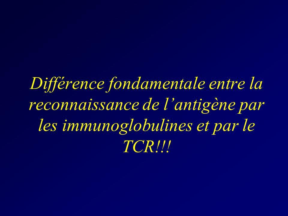 Différence fondamentale entre la reconnaissance de l'antigène par les immunoglobulines et par le TCR!!!