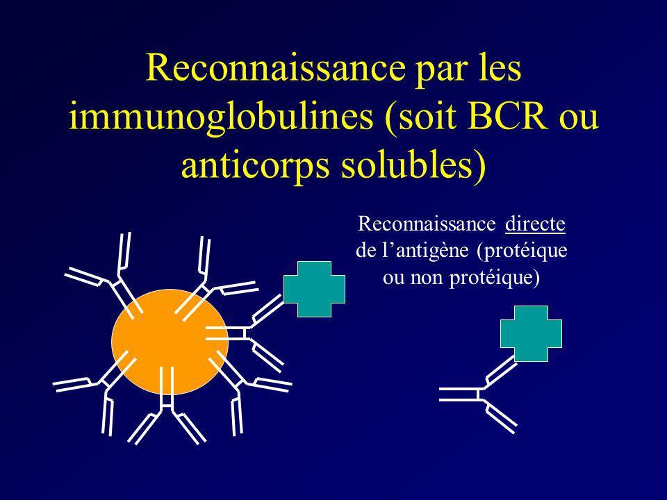 Reconnaissance directe de l'antigène (protéique ou non protéique)