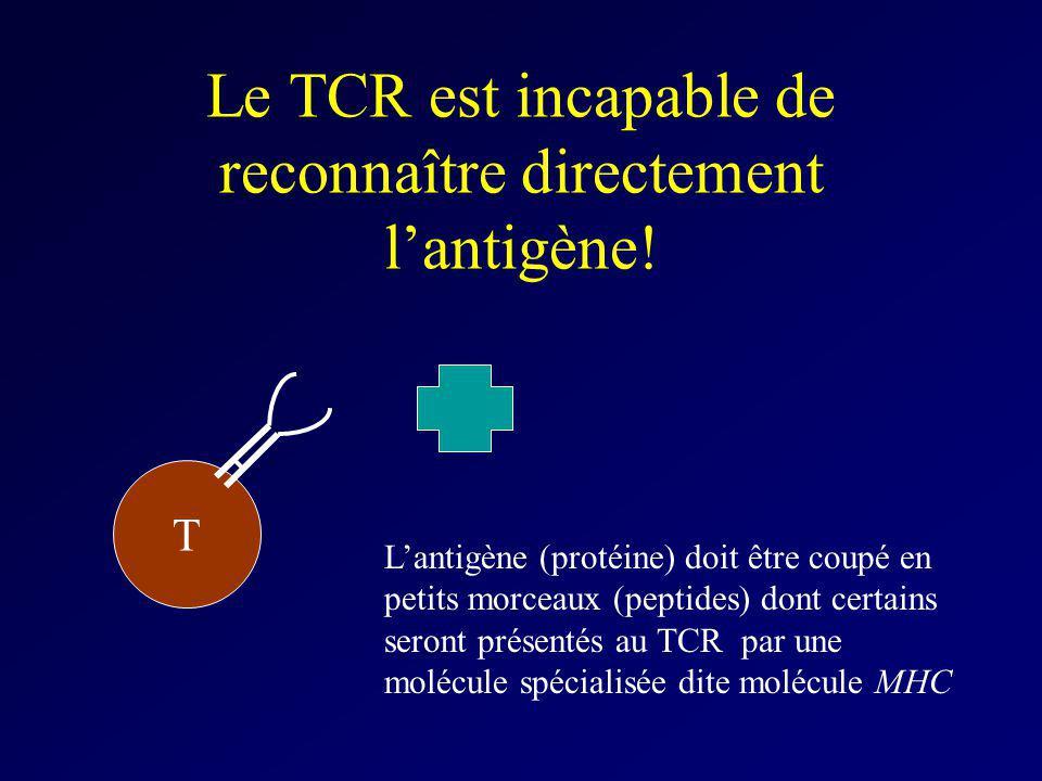 Le TCR est incapable de reconnaître directement l'antigène!