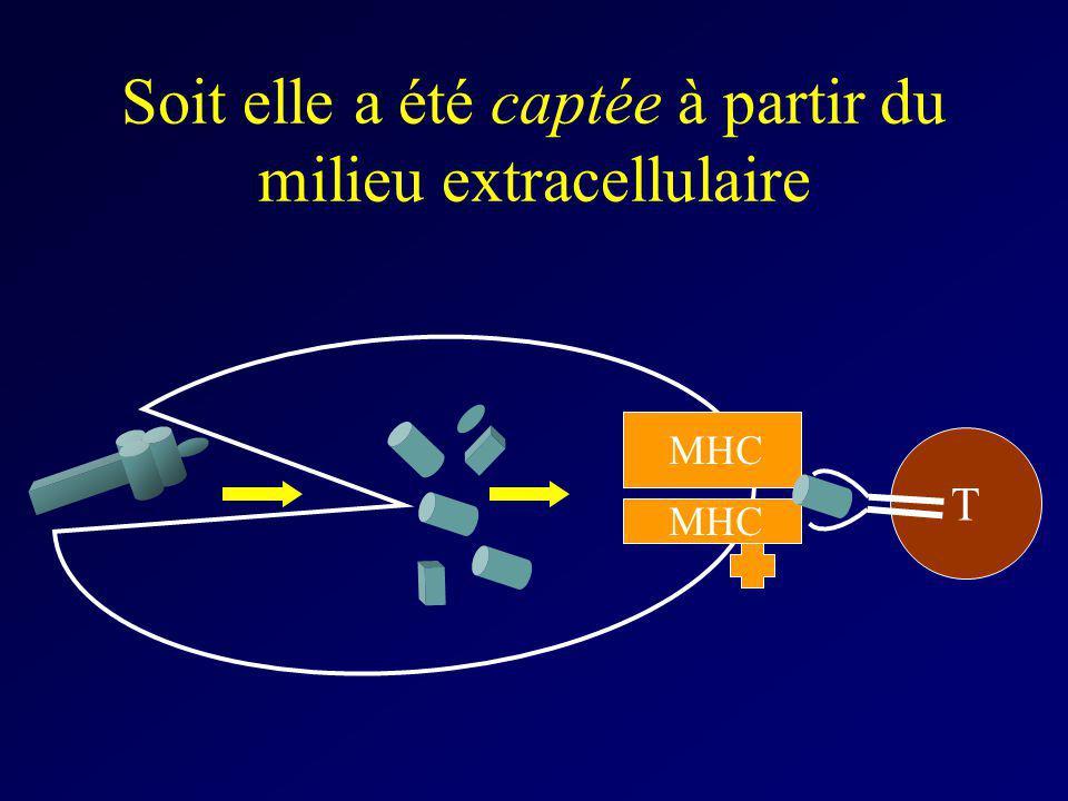 Soit elle a été captée à partir du milieu extracellulaire