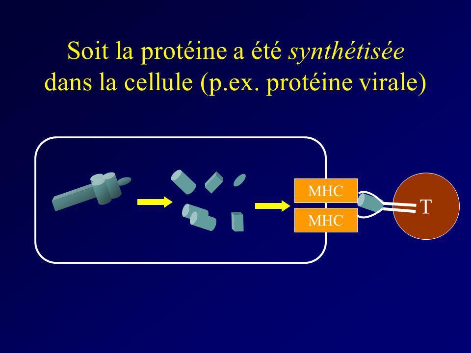 Soit la protéine a été synthétisée dans la cellule (p. ex