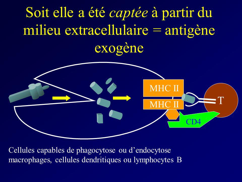 Soit elle a été captée à partir du milieu extracellulaire = antigène exogène