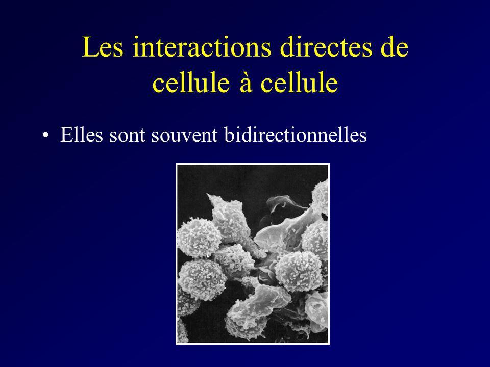 Les interactions directes de cellule à cellule