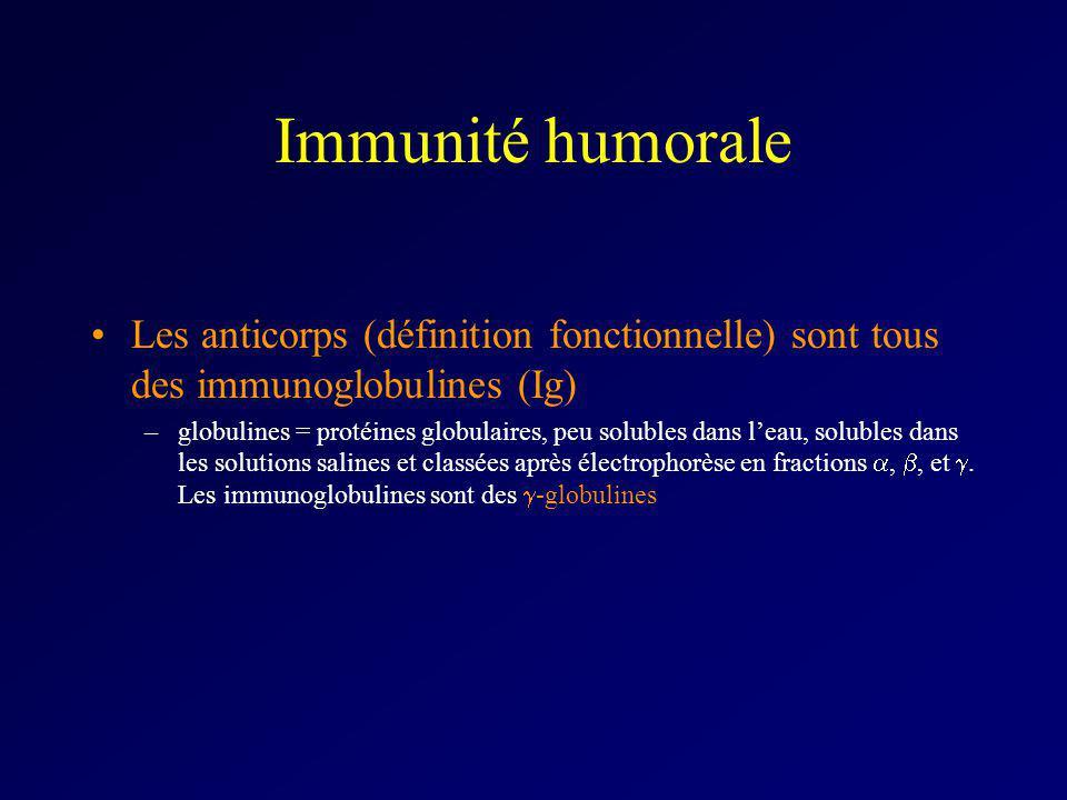 Immunité humorale Les anticorps (définition fonctionnelle) sont tous des immunoglobulines (Ig)
