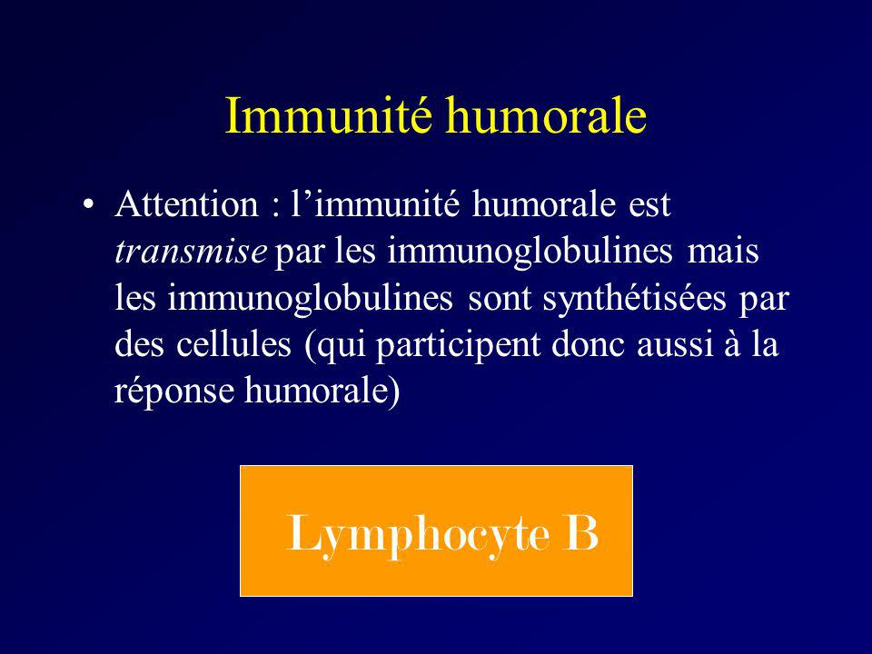 Immunité humorale Lymphocyte B