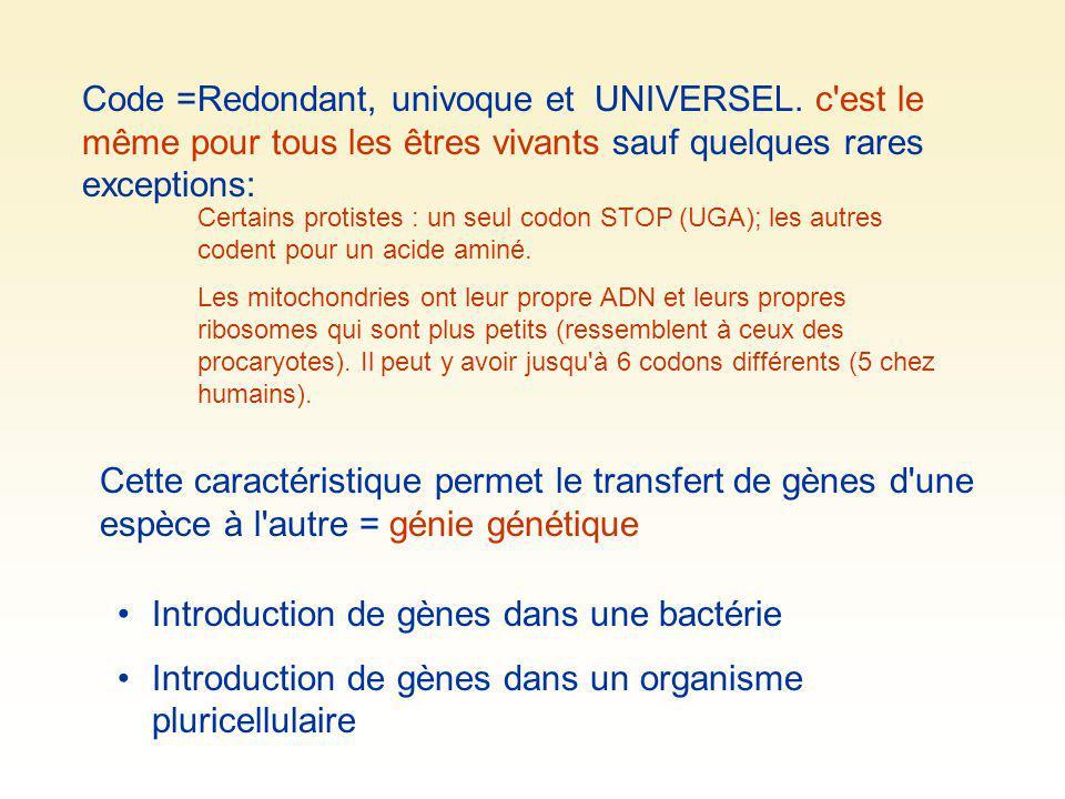 Introduction de gènes dans une bactérie