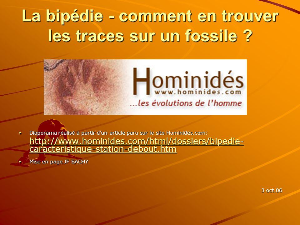 La bipédie - comment en trouver les traces sur un fossile