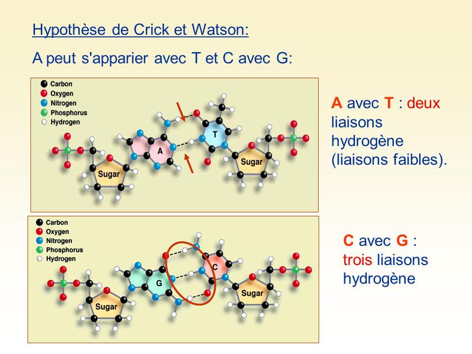Hypothèse de Crick et Watson: