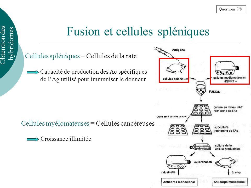 Fusion et cellules spléniques
