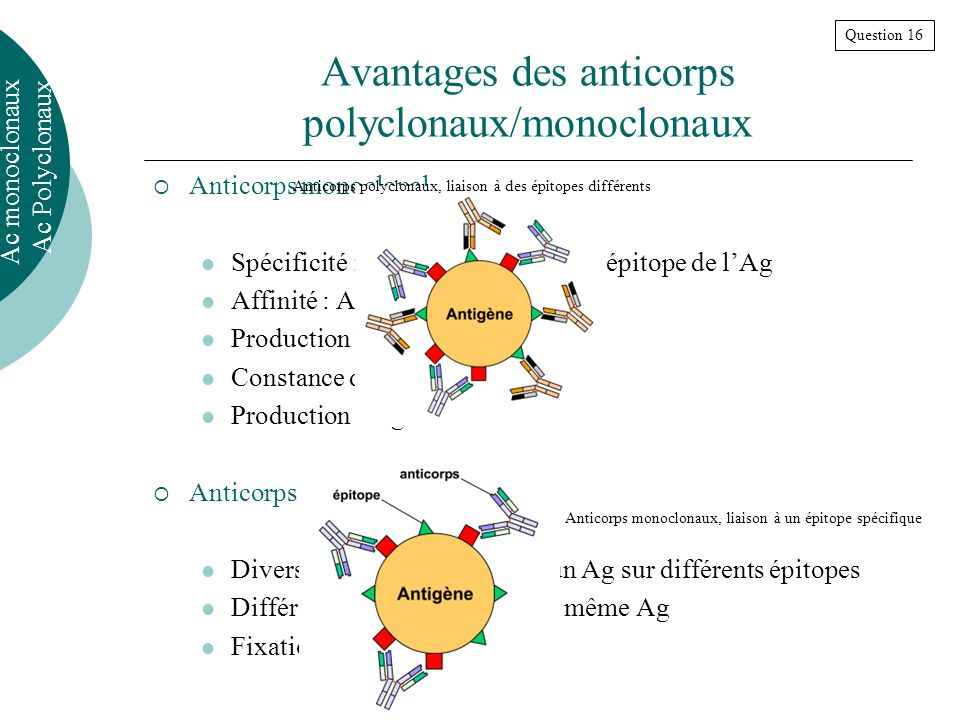 Avantages des anticorps polyclonaux/monoclonaux