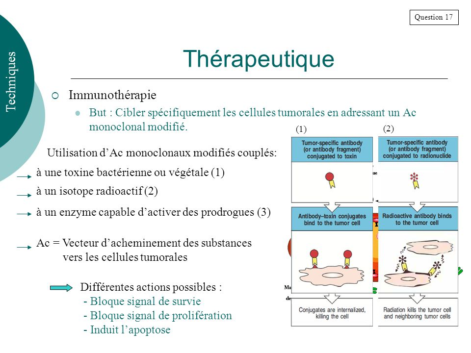Thérapeutique Techniques Immunothérapie