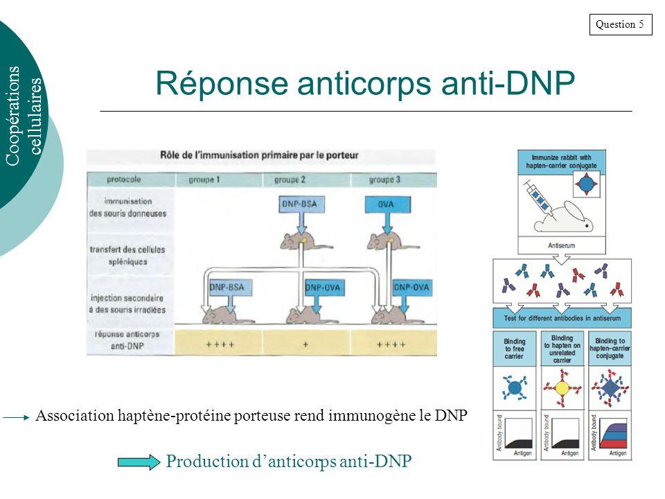 Réponse anticorps anti-DNP