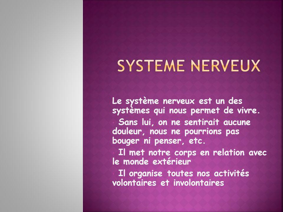 SYSTEME NERVEUX Le système nerveux est un des systèmes qui nous permet de vivre.