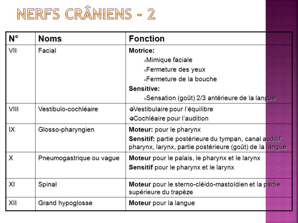 Nerfs crâniens - 2 N° Noms Fonction VII Facial Motrice: