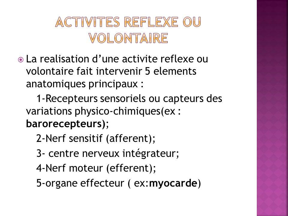 Activites reflexe ou volontaire