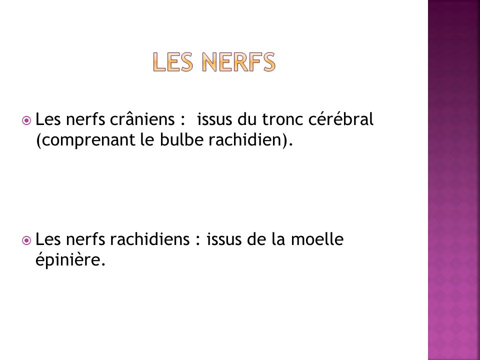 Les nerfs Les nerfs crâniens : issus du tronc cérébral (comprenant le bulbe rachidien).