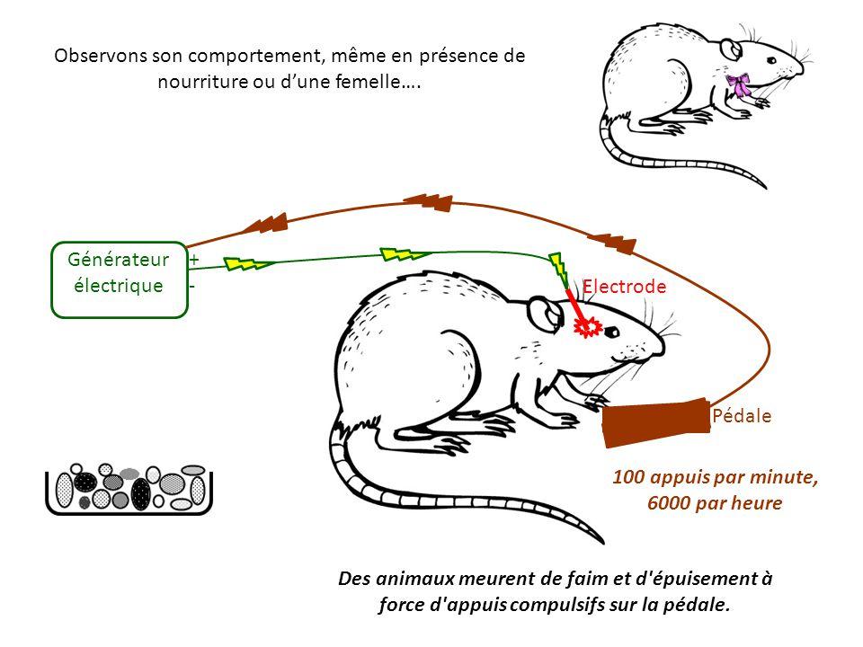 Générateur électrique + - Electrode
