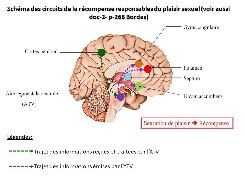 Schéma des circuits de la récompense responsables du plaisir sexuel (voir aussi doc-2- p-266 Bordas)