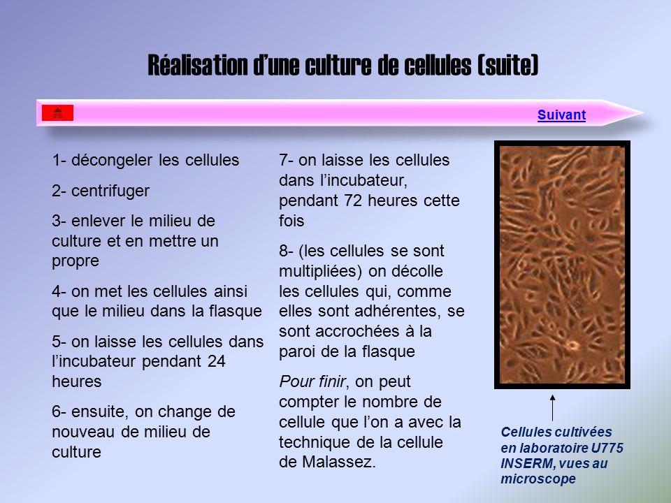 Réalisation d'une culture de cellules (suite)