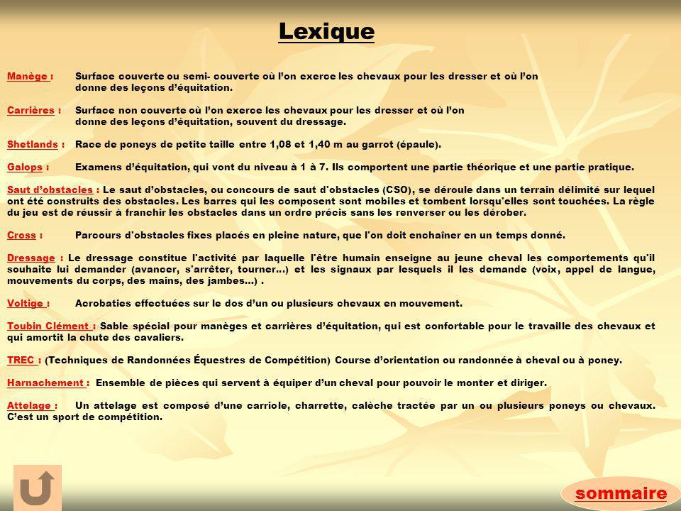 Lexique Manège : Surface couverte ou semi- couverte où l'on exerce les chevaux pour les dresser et où l'on.