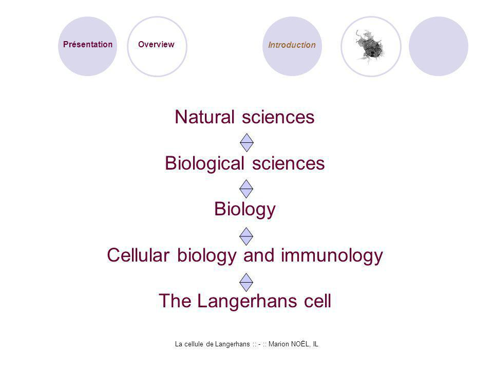 Cellular biology and immunology The Langerhans cell