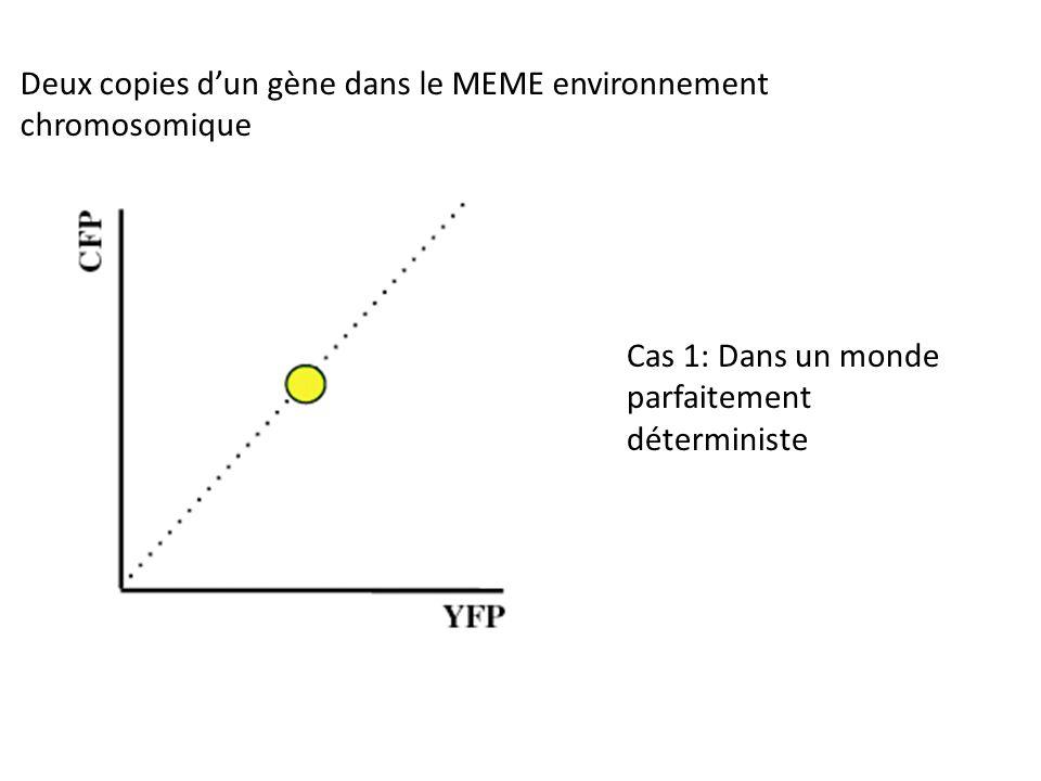 Deux copies d'un gène dans le MEME environnement chromosomique