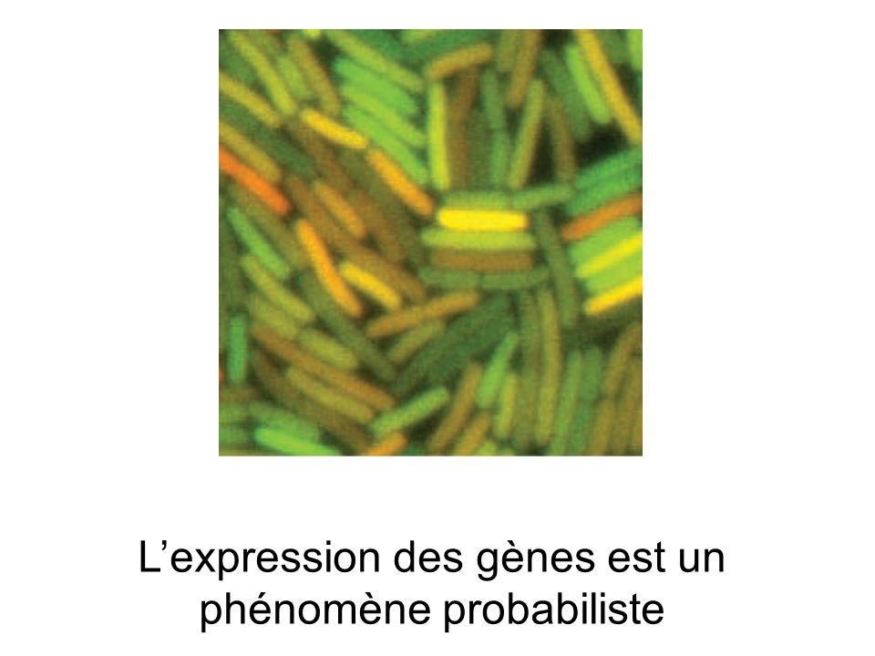 L'expression des gènes est un phénomène probabiliste
