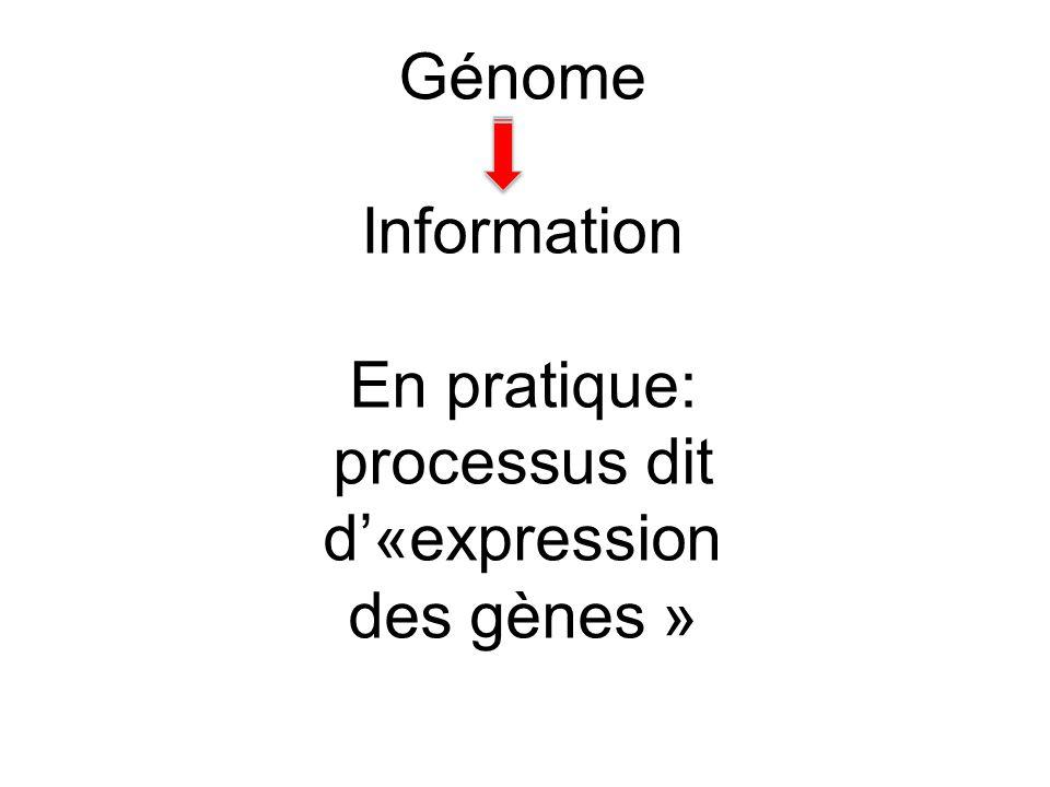 En pratique: processus dit d'«expression des gènes »