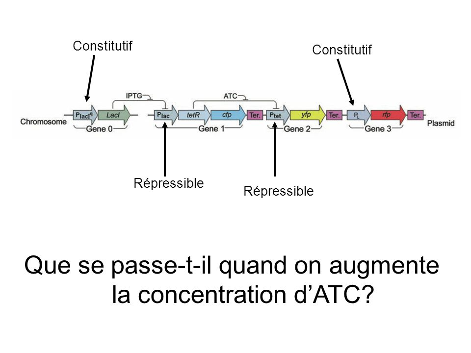 Que se passe-t-il quand on augmente la concentration d'ATC