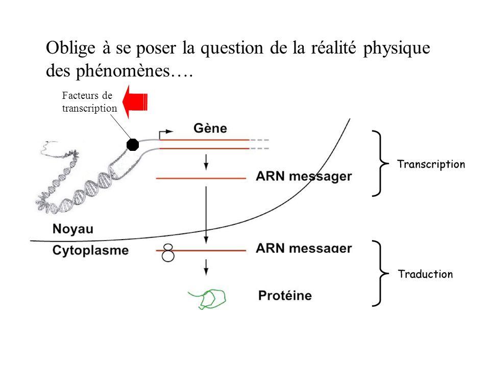 Oblige à se poser la question de la réalité physique des phénomènes….