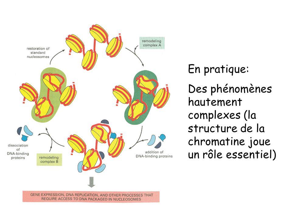 En pratique: Des phénomènes hautement complexes (la structure de la chromatine joue un rôle essentiel)