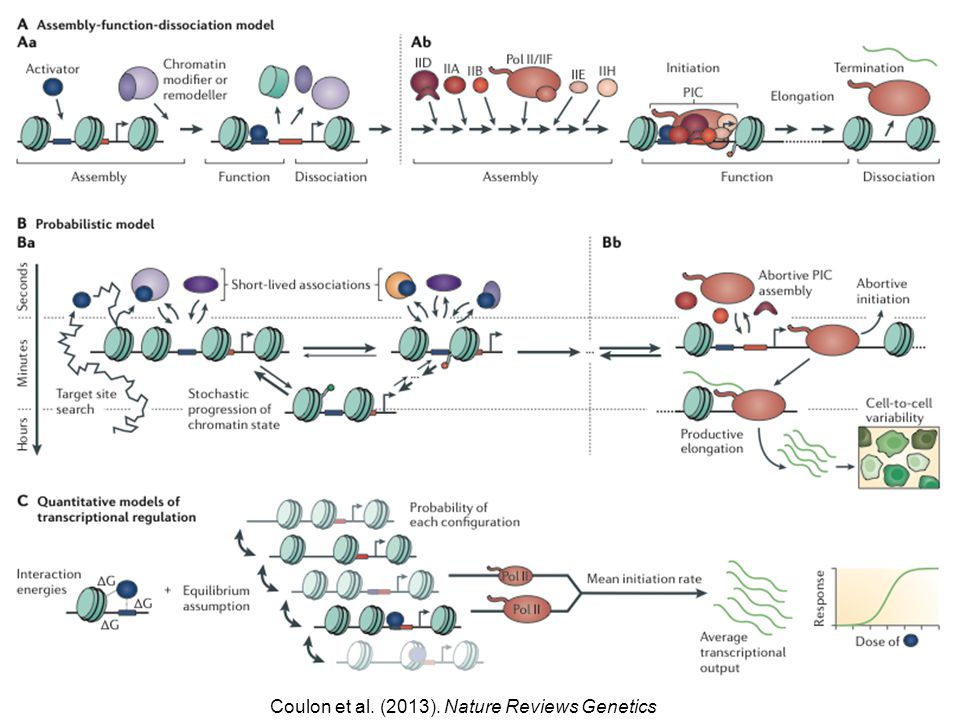 Coulon et al. (2013). Nature Reviews Genetics
