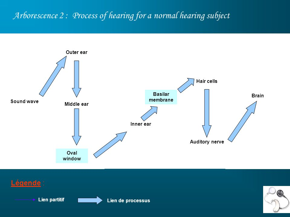 Arborescence 2 : Process of hearing for a normal hearing subject