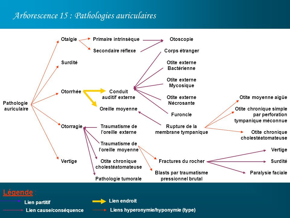 Arborescence 15 : Pathologies auriculaires