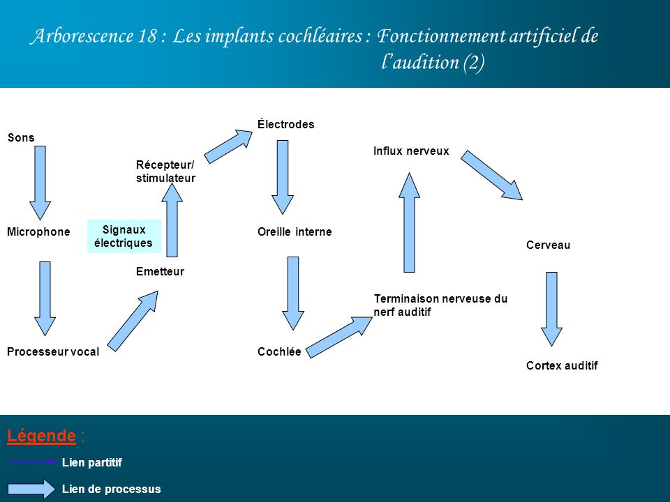 Arborescence 18 : Les implants cochléaires : Fonctionnement artificiel de l'audition (2)