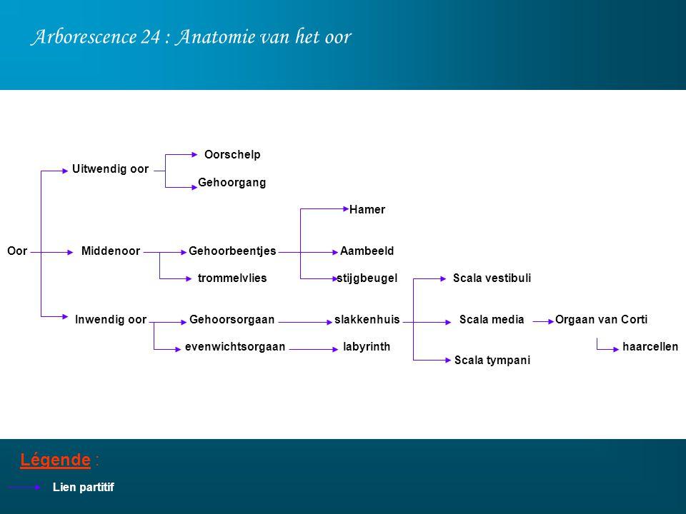 Arborescence 24 : Anatomie van het oor