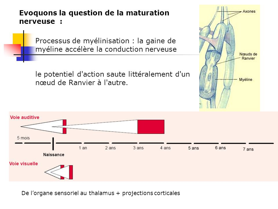 Evoquons la question de la maturation nerveuse :