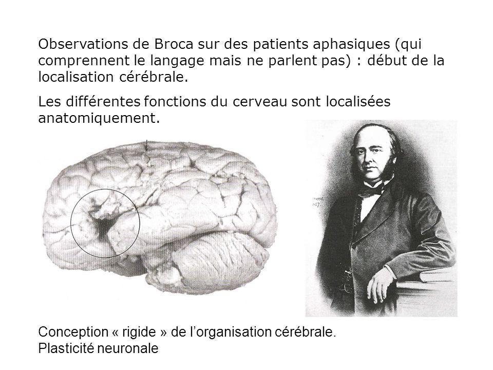 Observations de Broca sur des patients aphasiques (qui comprennent le langage mais ne parlent pas) : début de la localisation cérébrale.