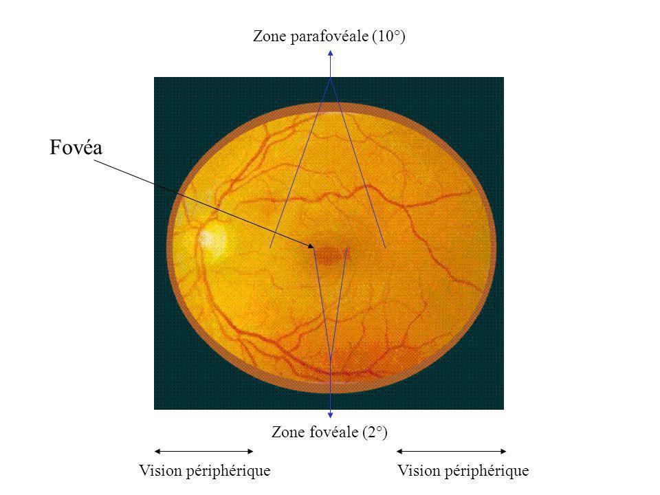 Fovéa Zone parafovéale (10°) Zone fovéale (2°) Vision périphérique