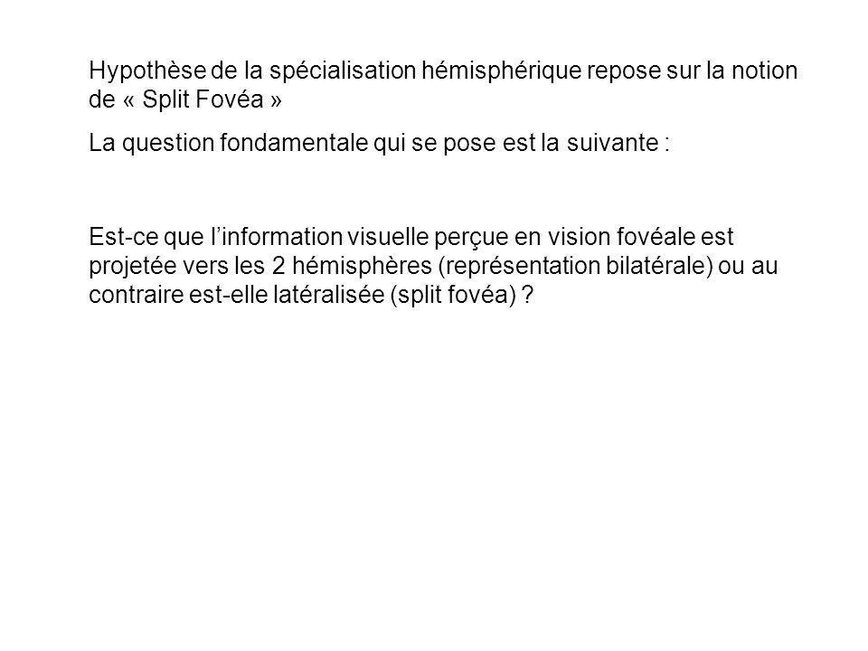 Hypothèse de la spécialisation hémisphérique repose sur la notion de « Split Fovéa »
