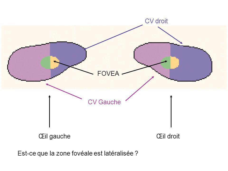 CV droit FOVEA CV Gauche Œil gauche Œil droit Est-ce que la zone fovéale est latéralisée