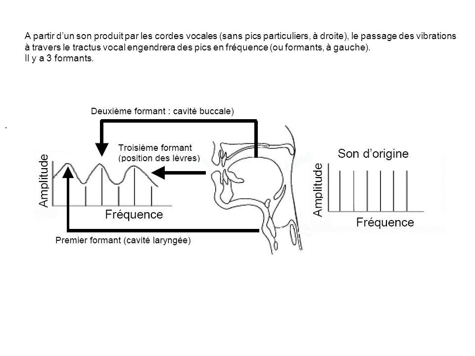 A partir d'un son produit par les cordes vocales (sans pics particuliers, à droite), le passage des vibrations à travers le tractus vocal engendrera des pics en fréquence (ou formants, à gauche).