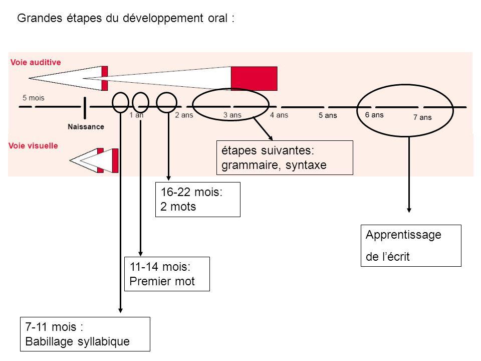 Grandes étapes du développement oral :